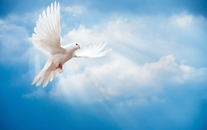 animal-pictures-animals-wallpapers-beautiful-white-dove-blue-sky-clouds-animal-photo